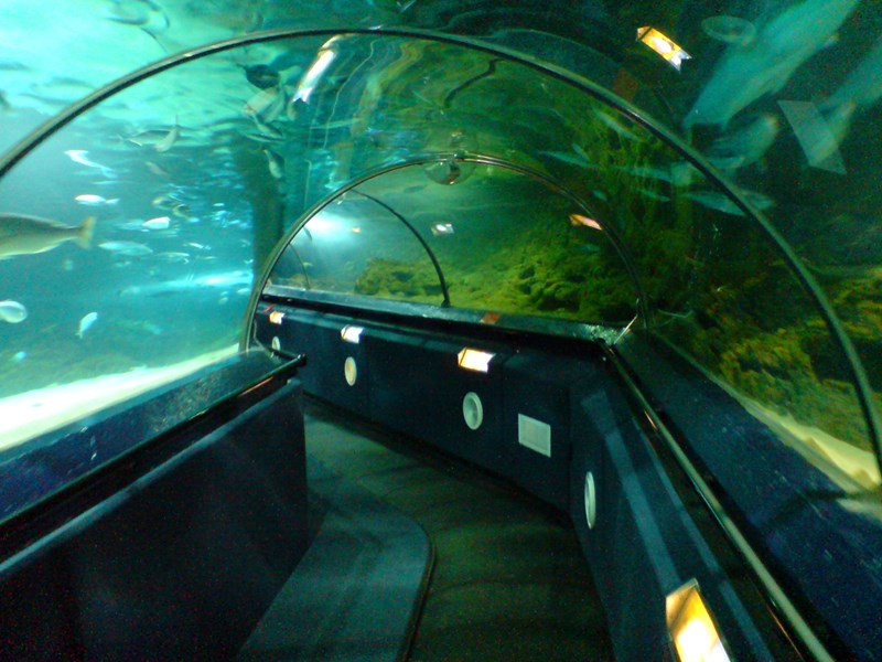 Aquarium Tunnel - Kelly Tarlton