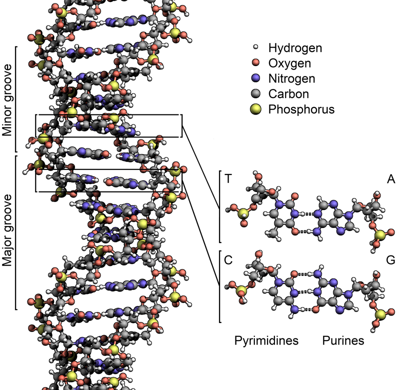 Discovery of DNA - Maurice Wilkins
